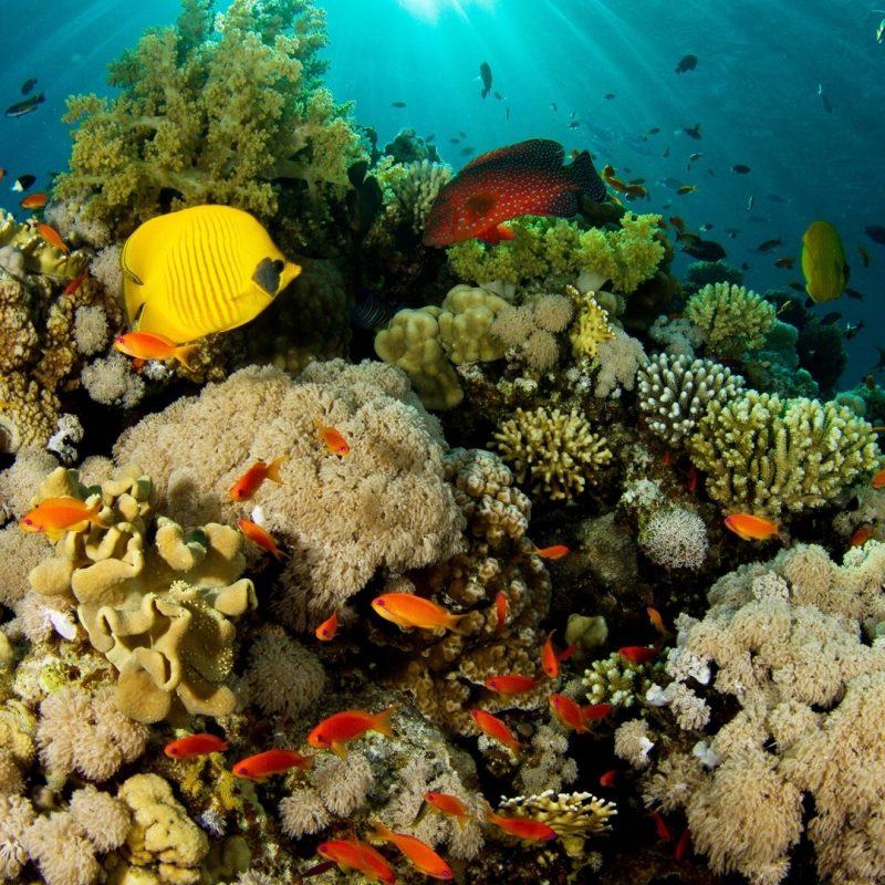 10 Most Popular Coral Reef Hd Wallpaper FULL HD 1920×1080 For PC Desktop 2021 free download coral reef e29da4 4k hd desktop wallpaper for 4k ultra hd tv e280a2 wide 800x800