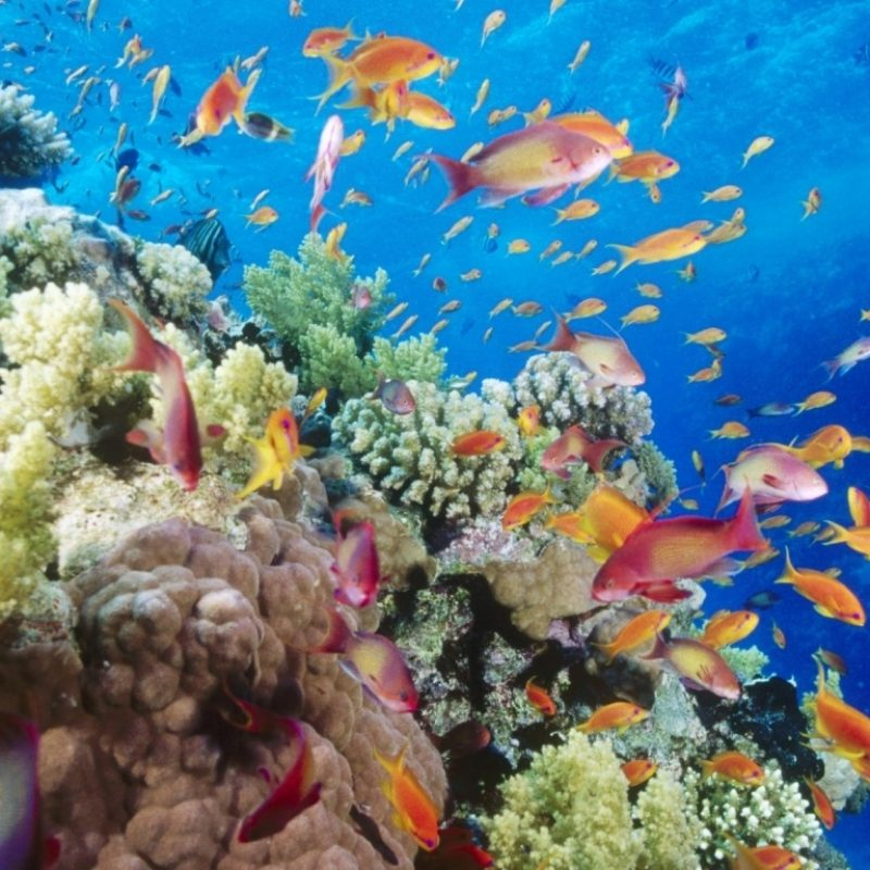10 Most Popular Coral Reef Wallpaper Widescreen Hd FULL HD 1080p For PC Background 2021 free download coral reef southern red sea near safaga egypt e29da4 4k hd desktop 1 800x800