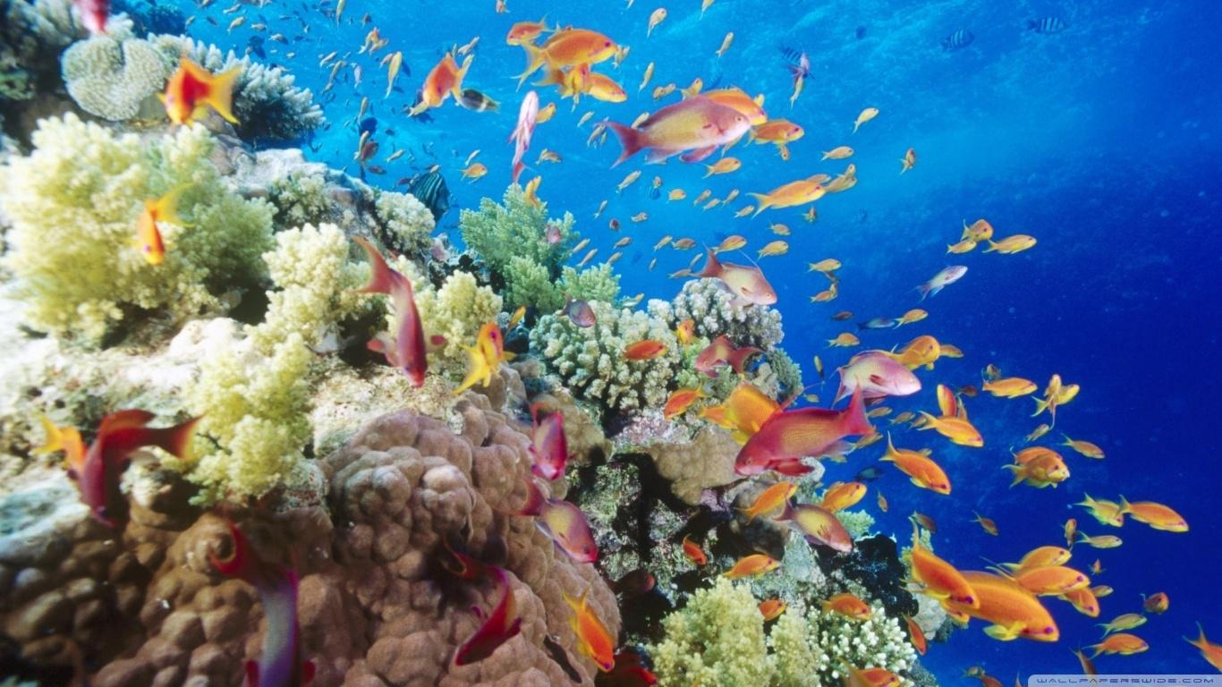 coral reef southern red sea near safaga egypt ❤ 4k hd desktop