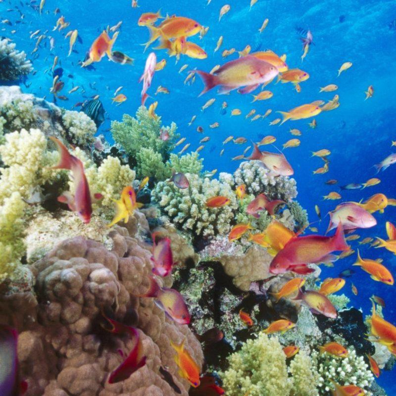10 New Coral Reef Wallpaper 1920X1080 FULL HD 1080p For PC Desktop 2020 free download coral reef southern red sea near safaga egypt e29da4 4k hd desktop 800x800