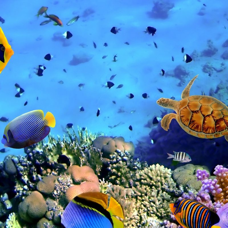 10 Most Popular Coral Reef Hd Wallpaper FULL HD 1920×1080 For PC Desktop 2021 free download coral reef wallpaper hd 65 images 800x800