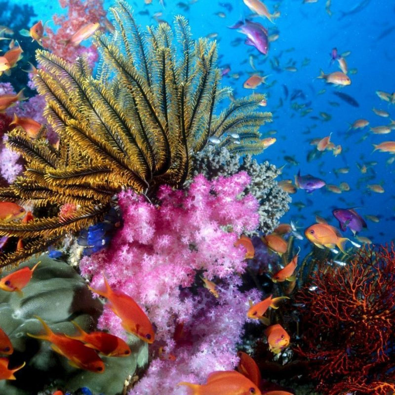 10 Most Popular Coral Reef Hd Wallpaper FULL HD 1920×1080 For PC Desktop 2021 free download coral reef wallpapers wallpaper cave 1 800x800