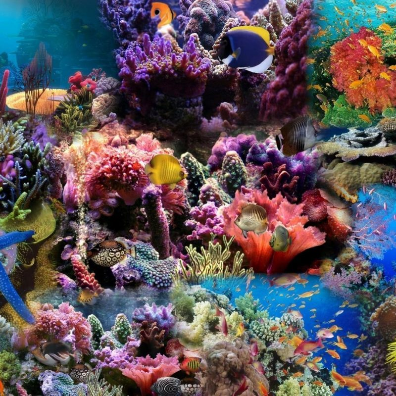 Coral Reef Background: 10 New Coral Reef Wallpaper 1920X1080 FULL HD 1080p For PC