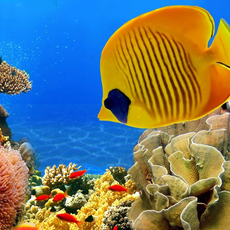 10 New Coral Reef Wallpaper 1920X1080 FULL HD 1080p For PC Desktop 2020 free download coral reef wallpapers wallpaper cave 4 800x800