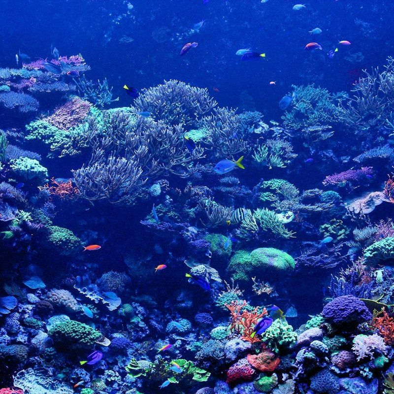 10 New Coral Reef Wallpaper 1920X1080 FULL HD 1080p For PC Desktop 2020 free download coral reef wallpapers wallpaper cave 5 800x800