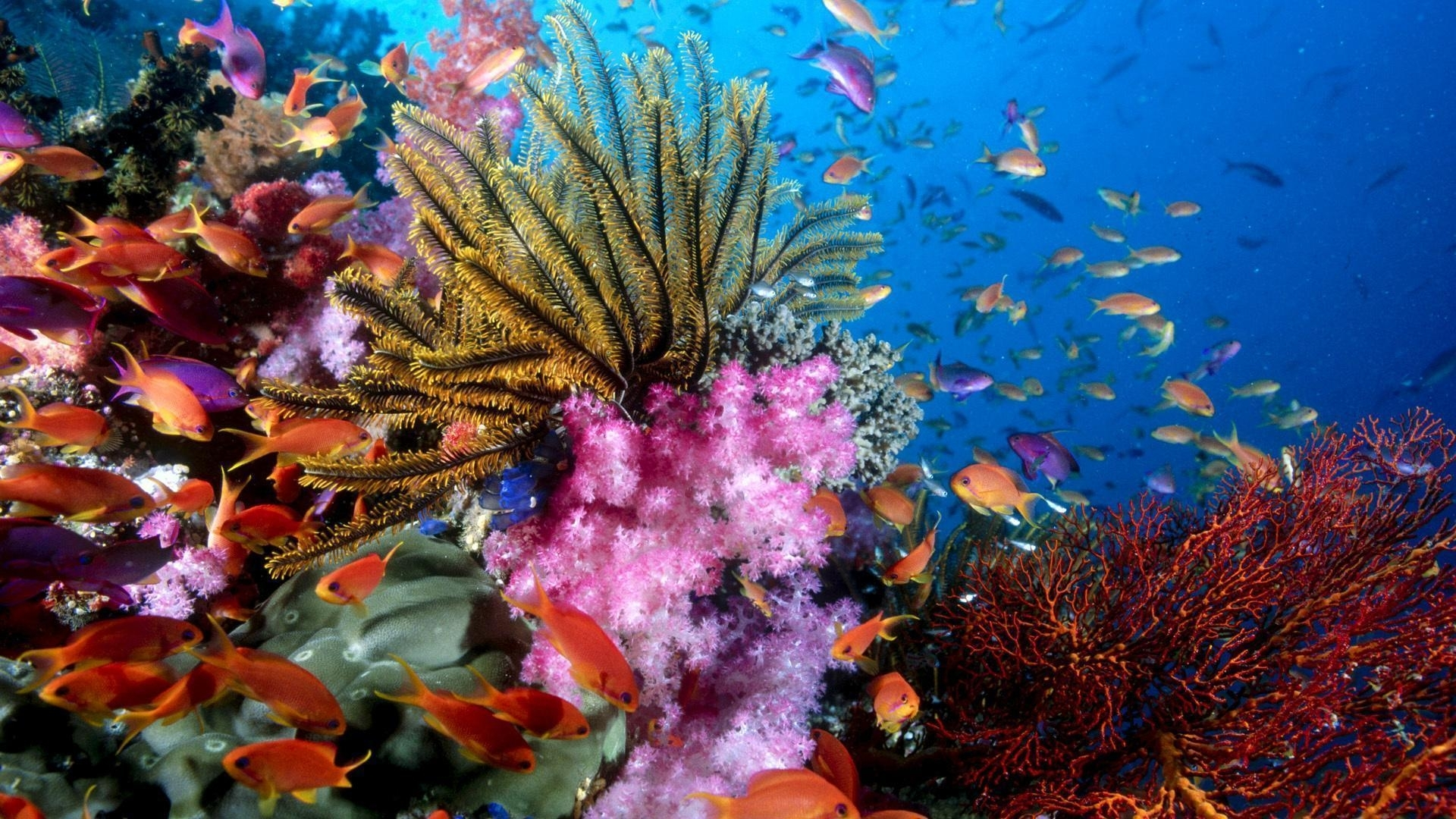 coral reef wallpapers - wallpaper cave