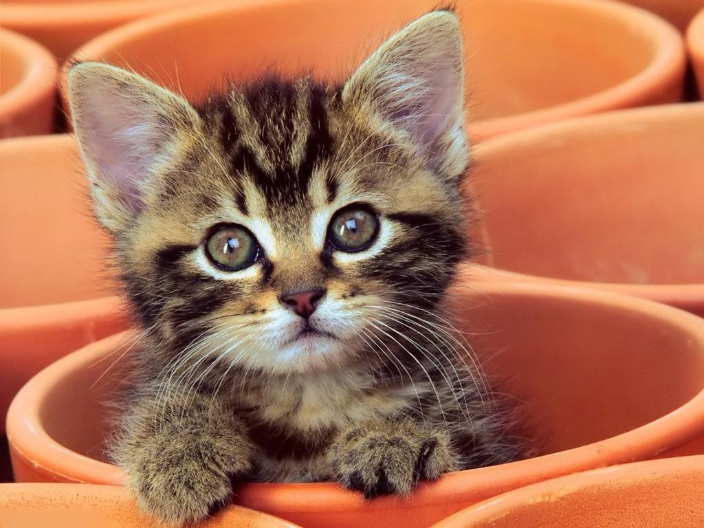 curious kitten desktop wallpaper | high quality wallpapers