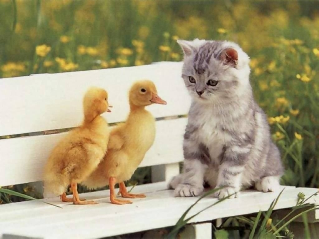 cute animal babies wallpaper android apps on google play | hd