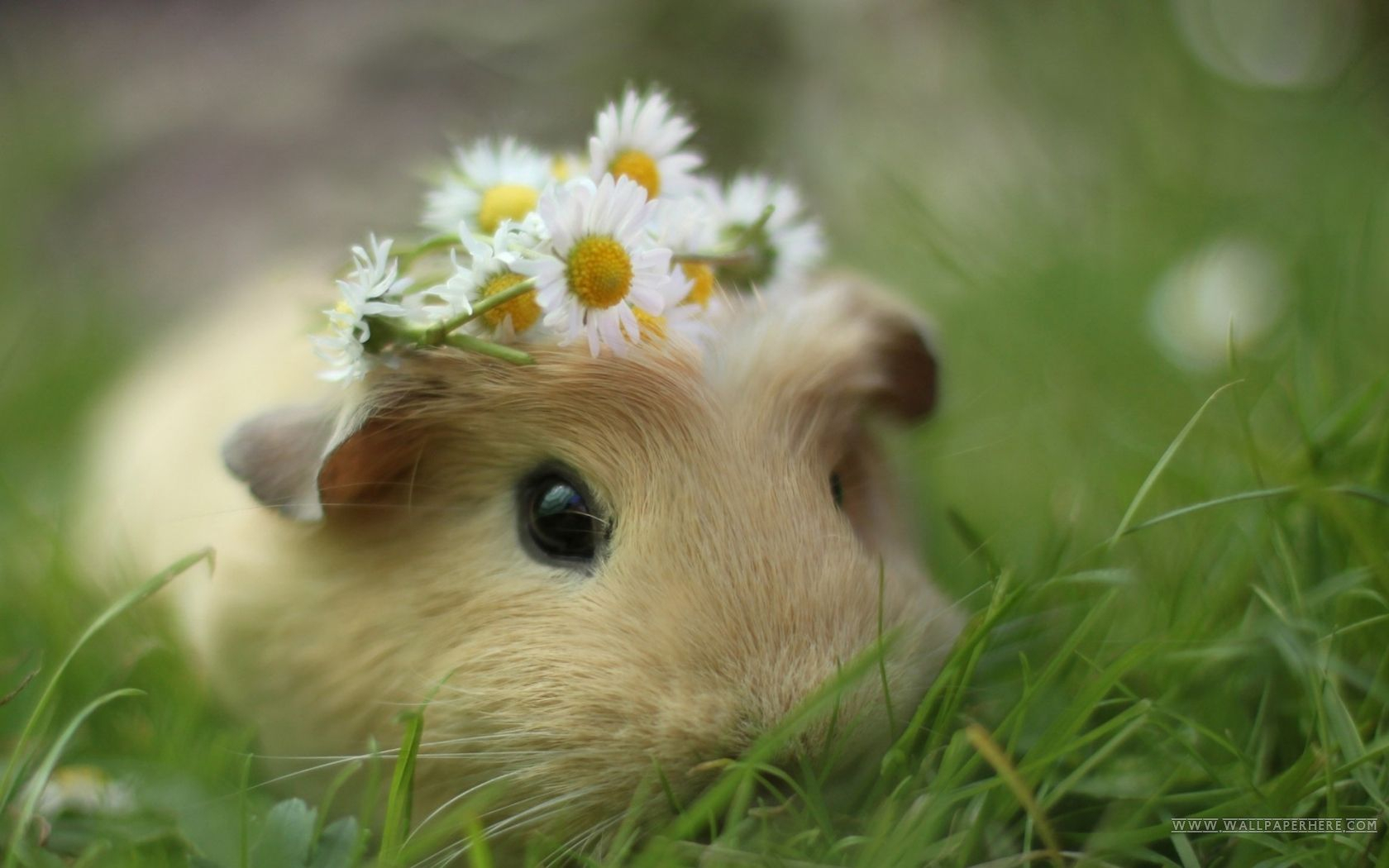 cute animal desktop wallpapers - top free cute animal desktop