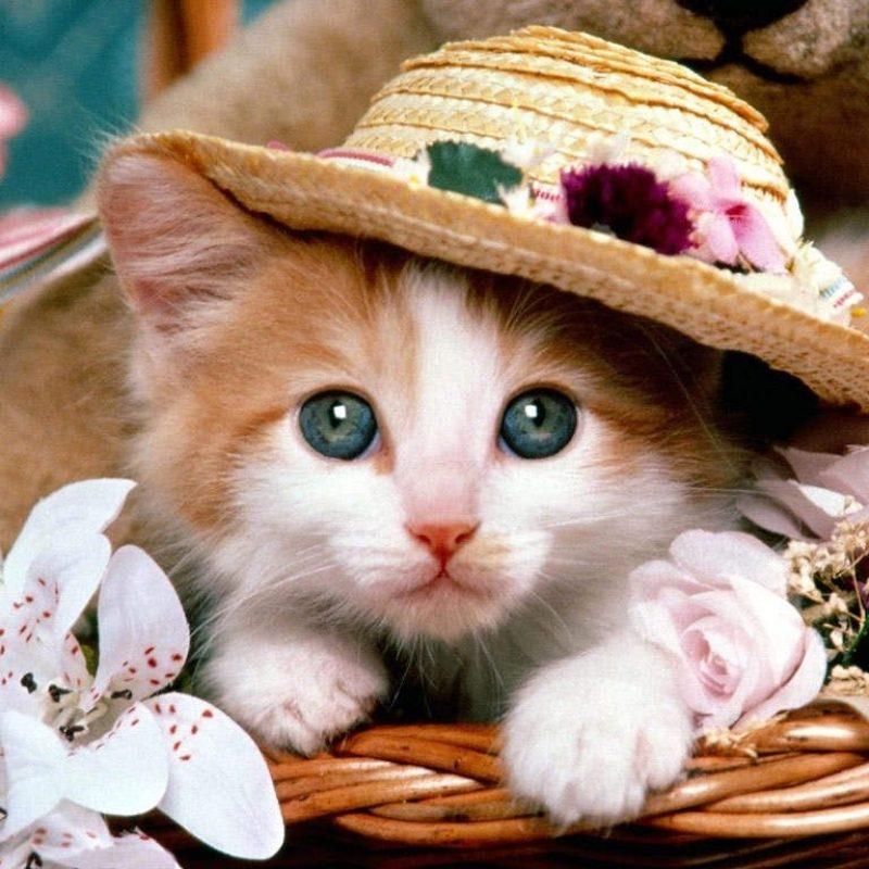 10 New Cute Animal Wallpaper Hd FULL HD 1920×1080 For PC Background 2021 free download cute animal wallpaper animals kitten cuties pinterest 800x800
