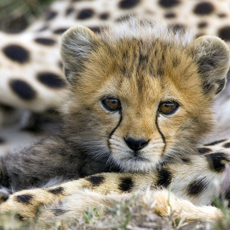 10 Top Cute Wild Animal Wallpaper FULL HD 1080p For PC Background 2021 free download cute animal wallpaper animals species 800x800