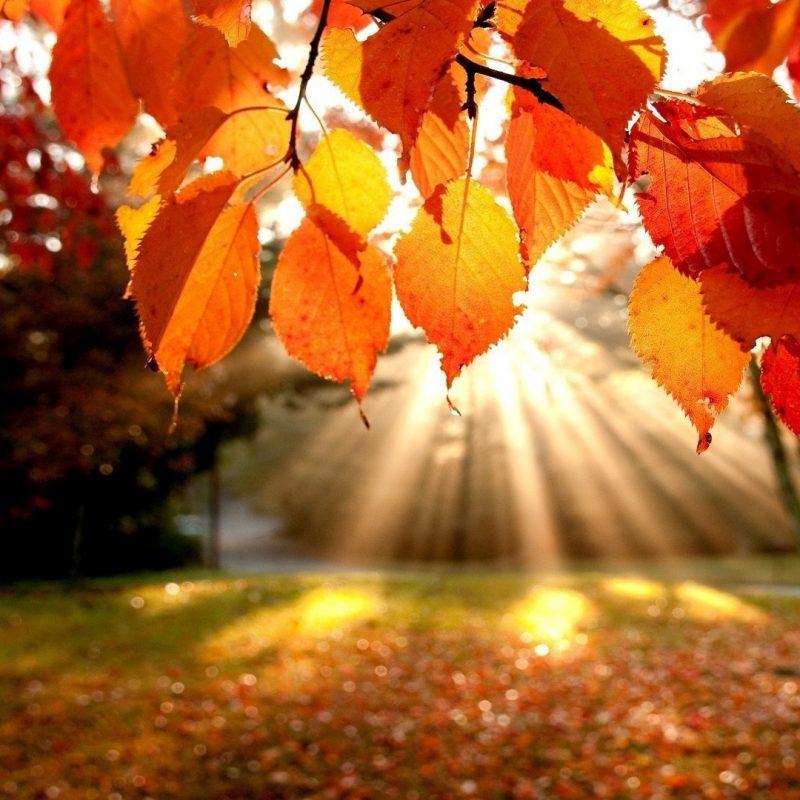 10 Latest Autumn Desktop Backgrounds Hd FULL HD 1080p For PC Desktop 2020 free download cute autumn wallpapers group 58 800x800