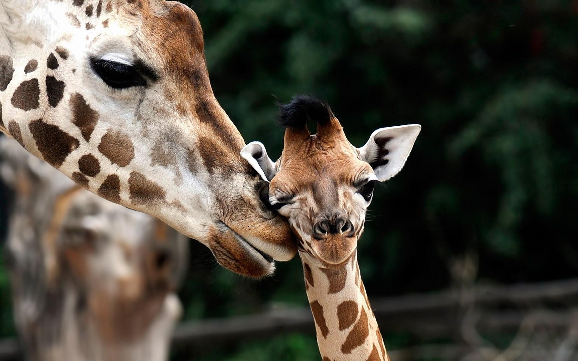 10 best baby animals desktop wallpaper full hd 1080p for pc desktop