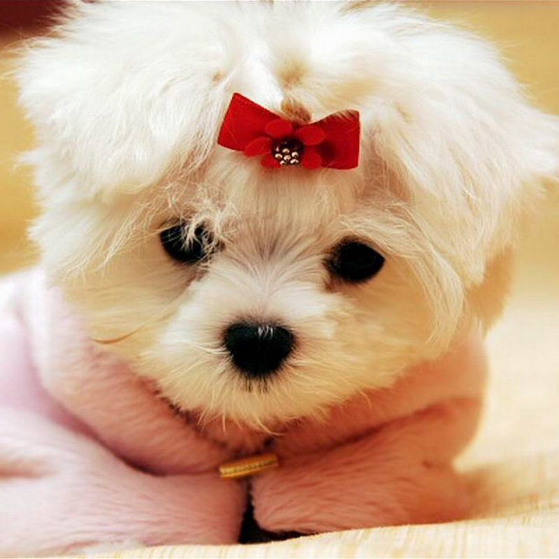 10 Latest Cute Baby Dogs Wallpaper FULL HD 1080p For PC Background 2020 free download cute baby animal wallpapers wallpaper wiki 800x800
