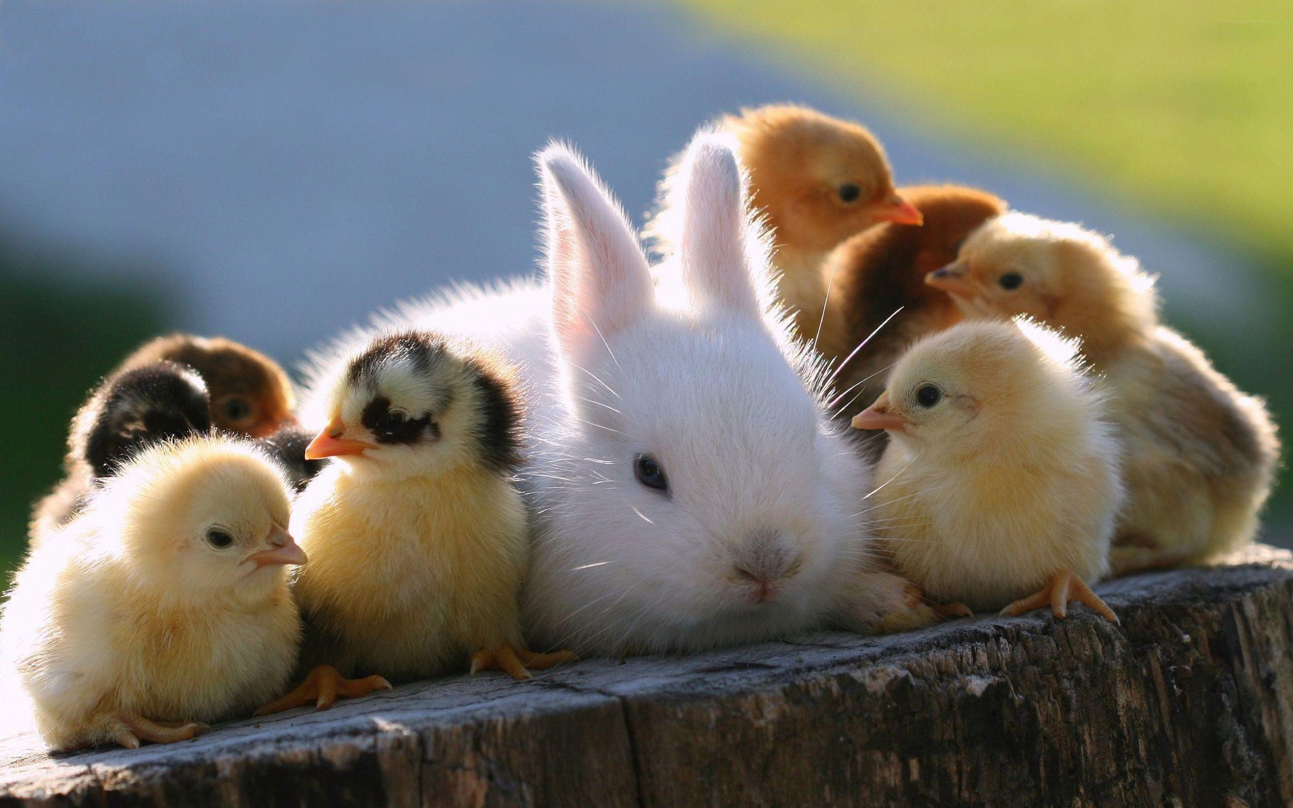 cute baby animals wallpaper - download hd cute baby animals