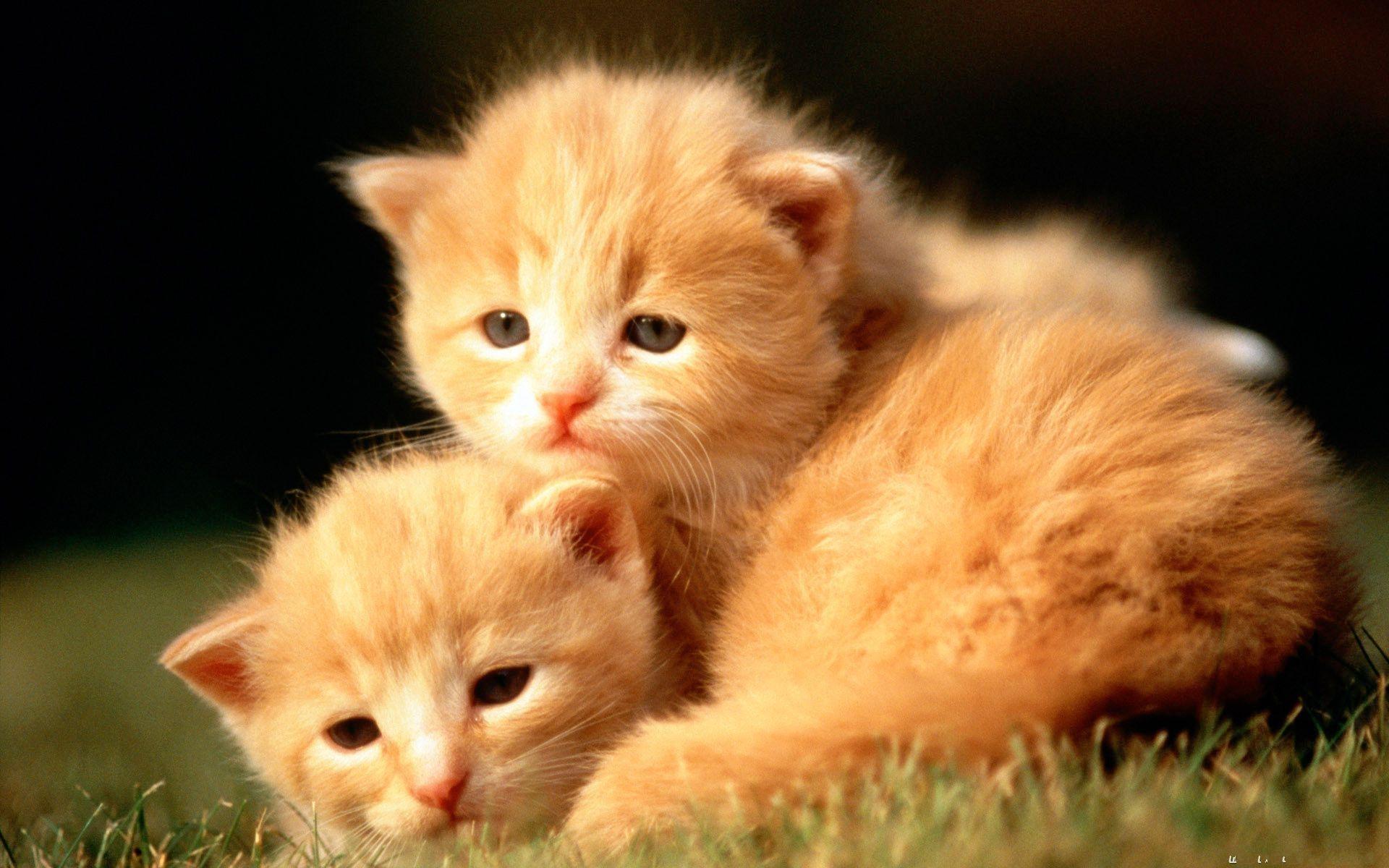 10 Top Cute Wild Animal Wallpaper Full Hd 1080p For Pc: 10 Best Baby Animals Desktop Wallpaper FULL HD 1080p For