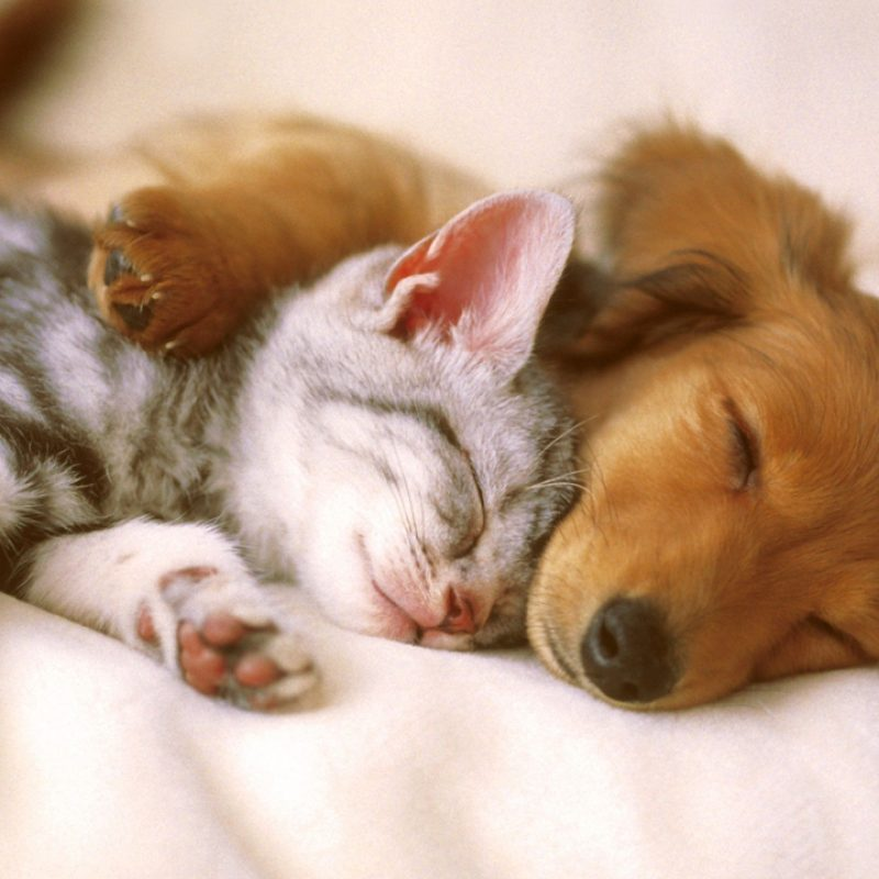 10 New Kitten And Puppies Wallpaper FULL HD 1080p For PC Desktop 2021 free download cute baby animals wallpapers android apps on google play 800x800