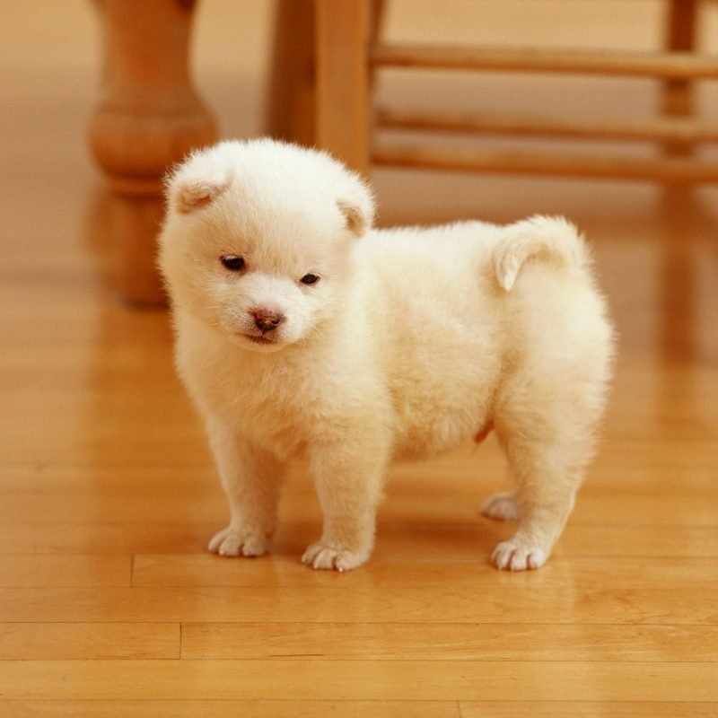 10 Latest Cute Baby Dogs Images FULL HD 1920×1080 For PC Desktop 2021 free download cute baby dog for background wallpaper high resolution photos very 800x800