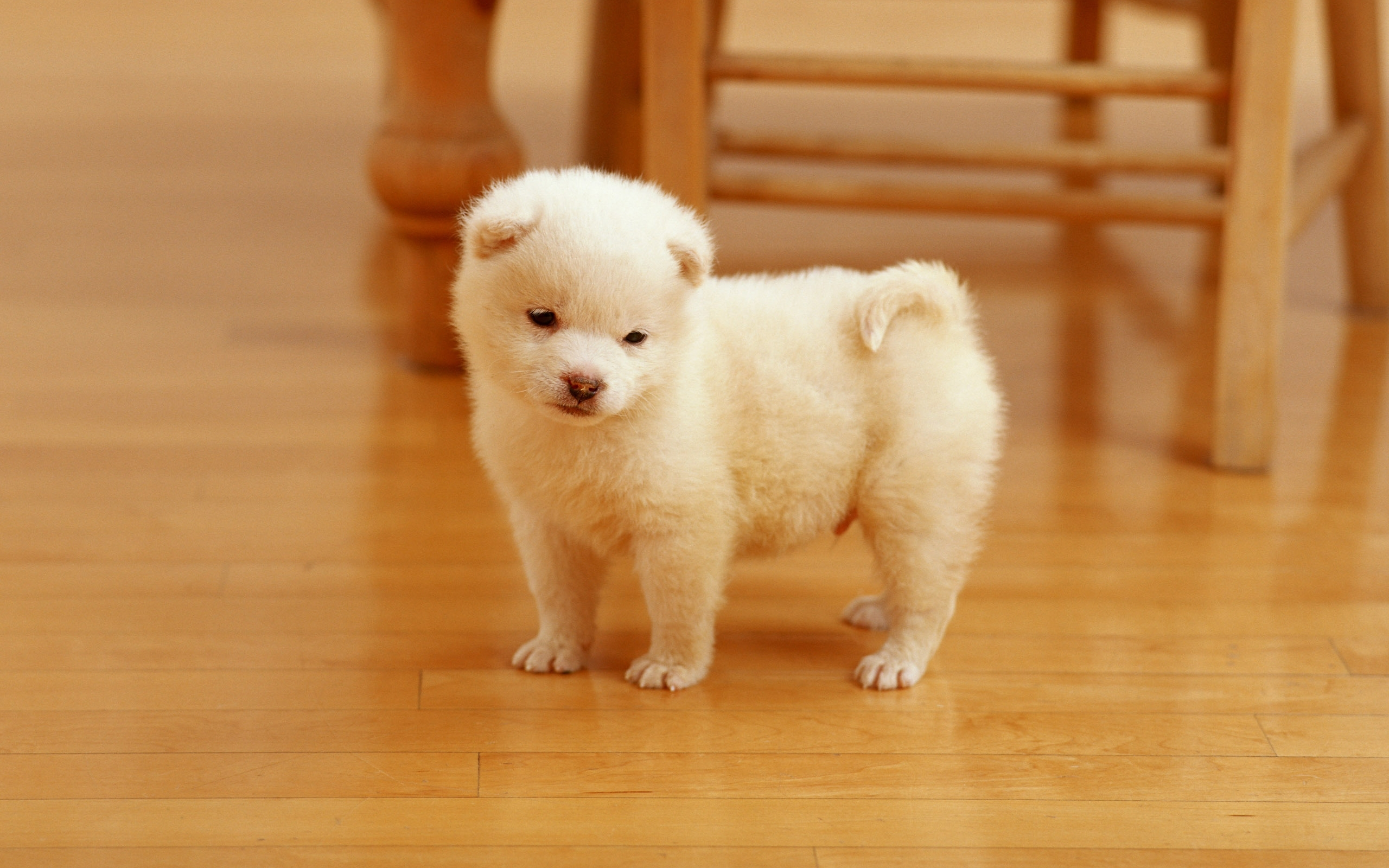 cute baby dog for background wallpaper high resolution photos very