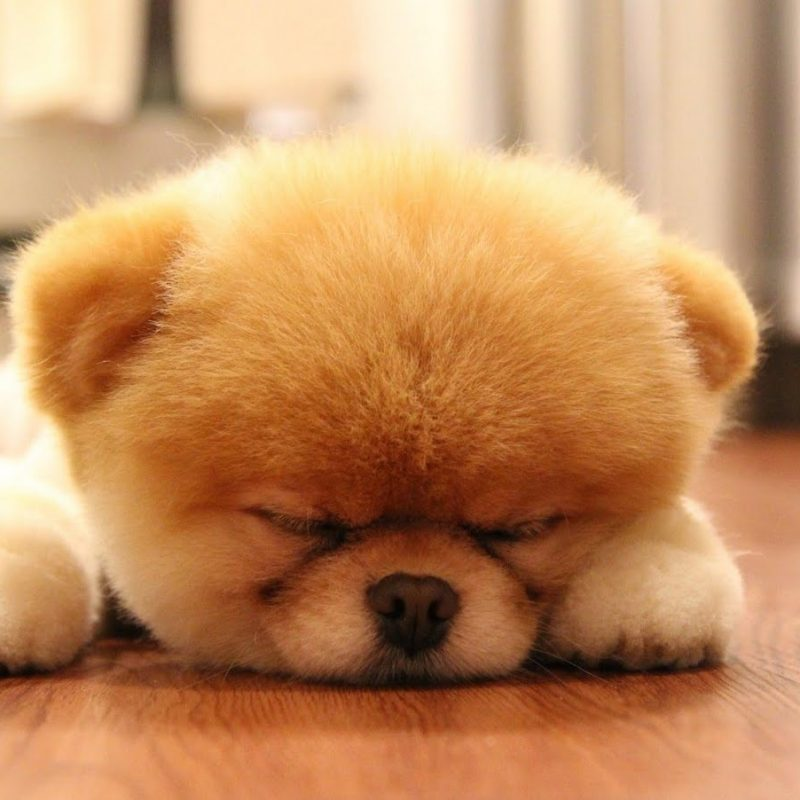 10 Latest Cute Baby Dogs Images FULL HD 1920×1080 For PC Desktop 2021 free download cute baby dogs pics wallpaper 800x800