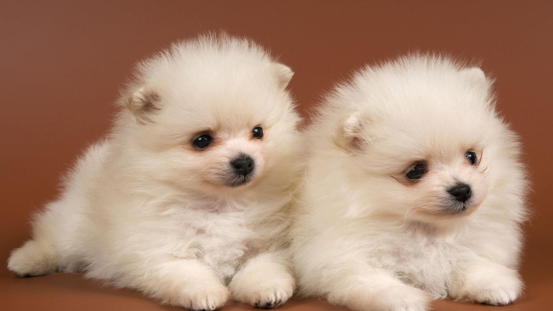cute baby dogs wallpaper | wallpaper studio 10 | tens of thousands