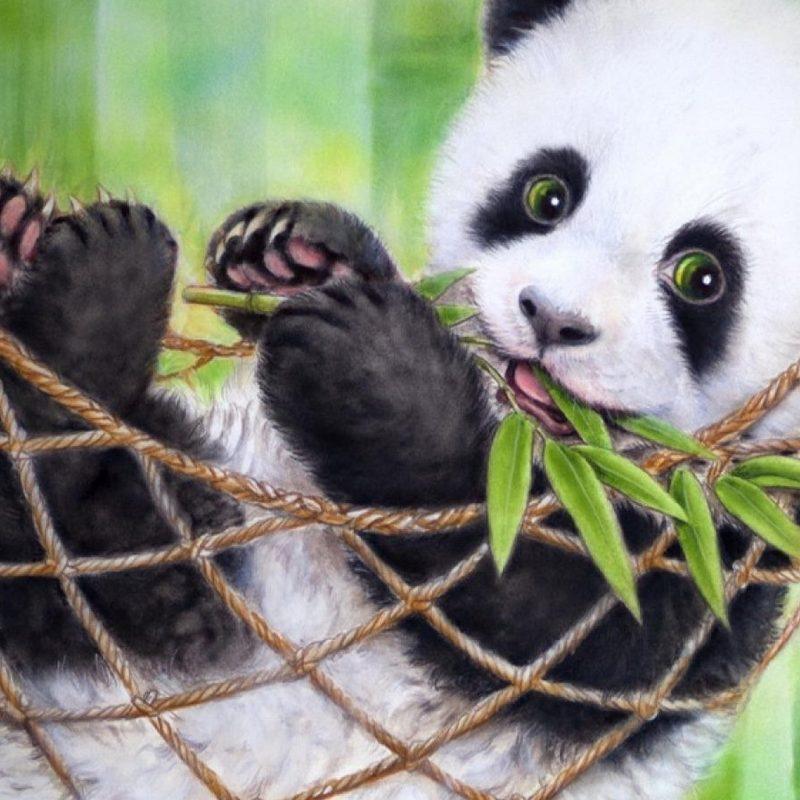 10 Best Cute Baby Panda Images FULL HD 1920×1080 For PC Background 2018 free download cute baby panda bear wallpaper 2018 cute screensavers 1 800x800