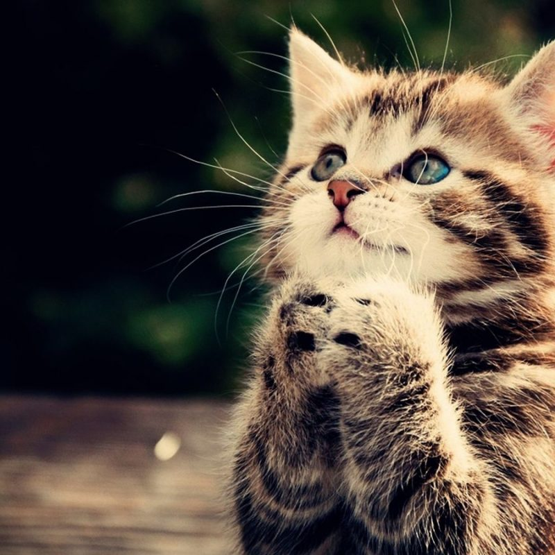 10 Most Popular Cute Wallpapers Of Kittens FULL HD 1920×1080 For PC Desktop 2018 free download cute backgrounds for desktop cute animal desktop backgrounds 800x800