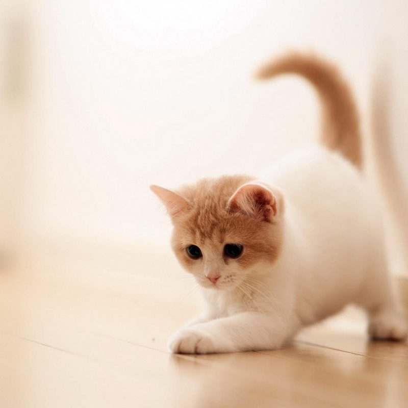 10 Best Hd Cute Cat Wallpapers FULL HD 1080p For PC Desktop 2018 free download cute cat backgrounds group 70 800x800