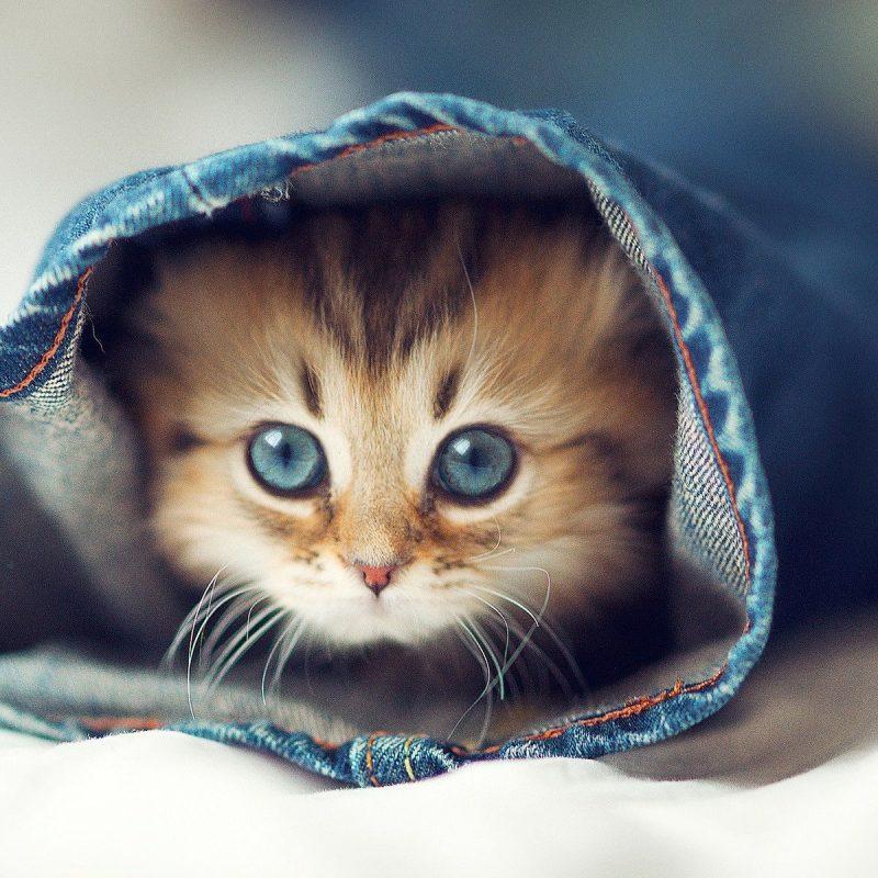 10 Most Popular Cute Cat Desktop Wallpaper FULL HD 1920×1080 For PC Desktop 2018 free download cute cat desktop wallpaper 800x800