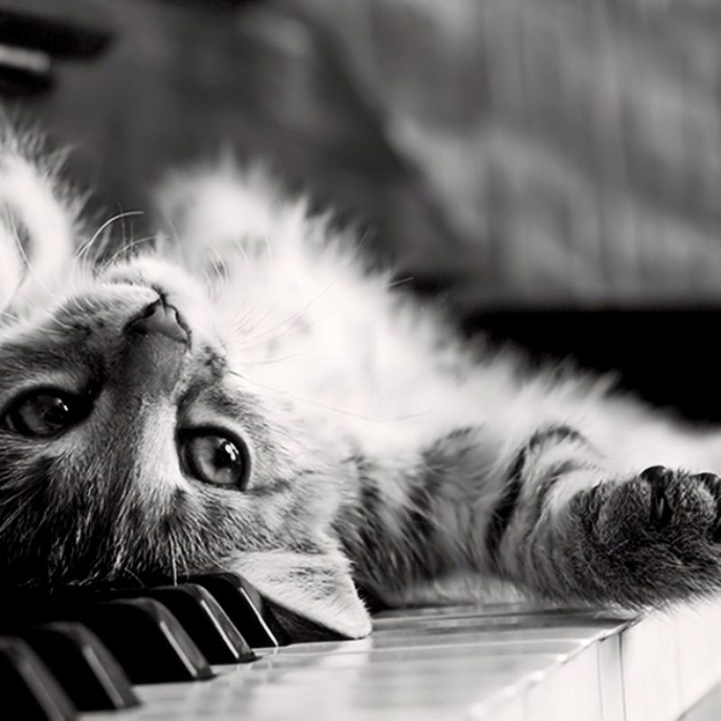 10 New Cat Wallpaper For Computer FULL HD 1080p For PC Background 2020 free download cute cat on the piano wallpaper full hd 5440 wallpaper high 800x800