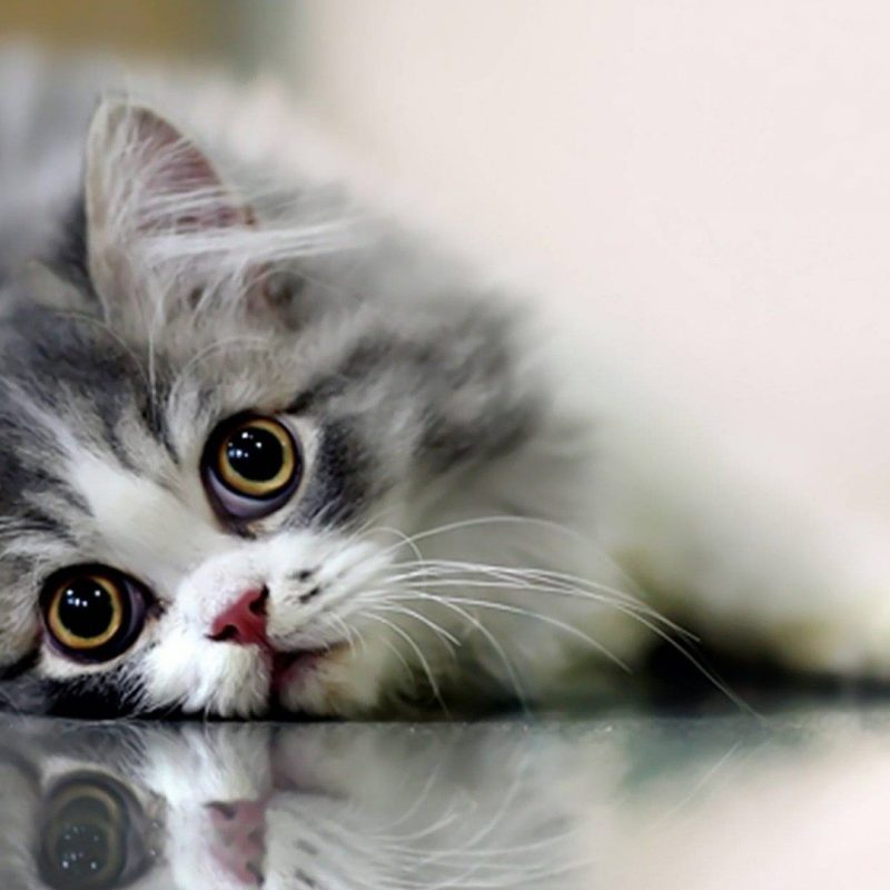 10 Latest Cute Cat Hd Wallpaper 1920X1080 FULL HD 1920×1080 For PC Background 2018 free download cute cat wallpaper bdfjade 800x800