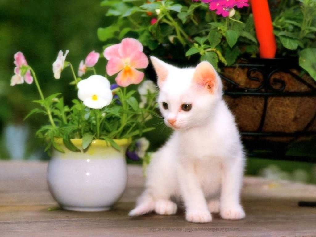 cute cat wallpapers free download collection (72+)