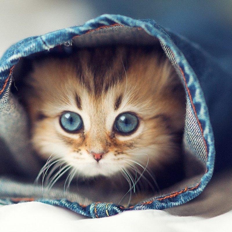10 Best Hd Cute Cat Wallpapers FULL HD 1080p For PC Desktop 2018 free download cute cats cat wallpaper meme hd wallpapers photos 800x800
