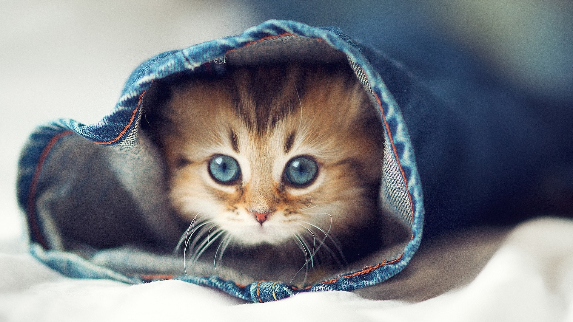 cute cats - cat wallpaper meme | hd wallpapers & photos