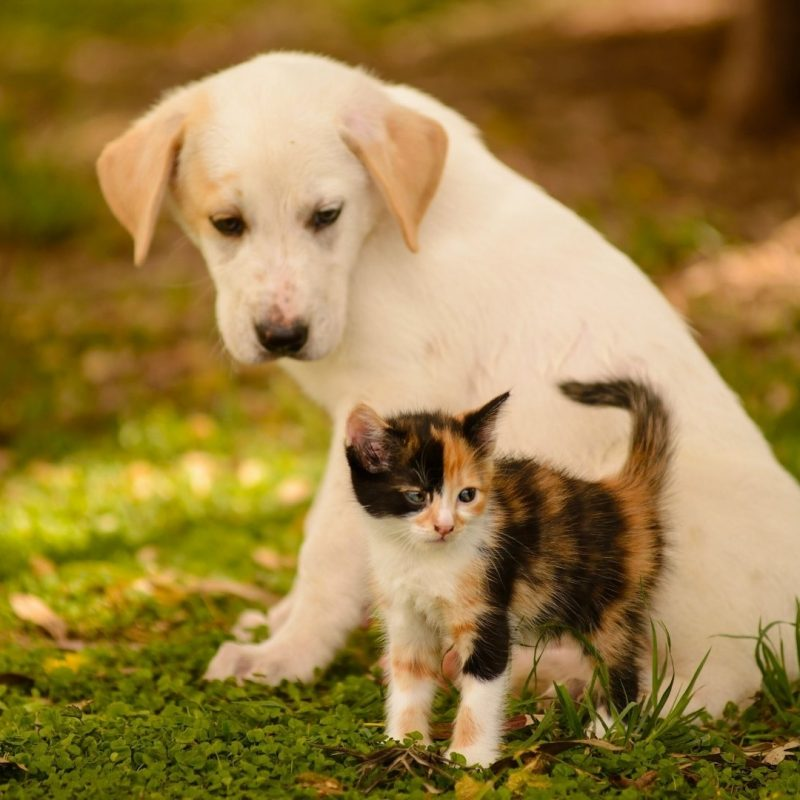 10 Most Popular Dog And Cat Wallpaper FULL HD 1080p For PC Background 2021 free download cute dog and cat wallpaper pixelstalk 1 800x800