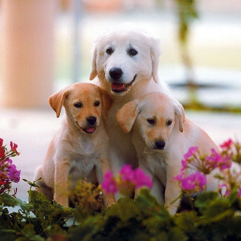 10 Best Cute Dog Wallpaper Free Download FULL HD 1080p For PC Background 2021 free download cute dog pictures free free cute hd cute dogs wallpapers 1600x1200 800x800