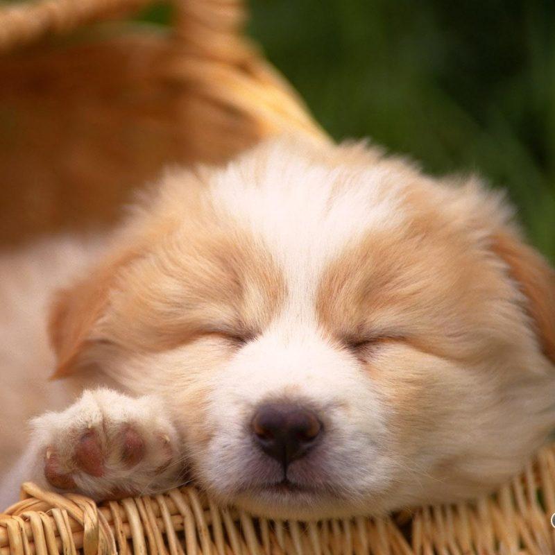 10 Best Cute Dog Wallpaper Free Download FULL HD 1080p For PC Background 2021 free download cute dog wallpaper 1080p desktop wallpaper box 800x800