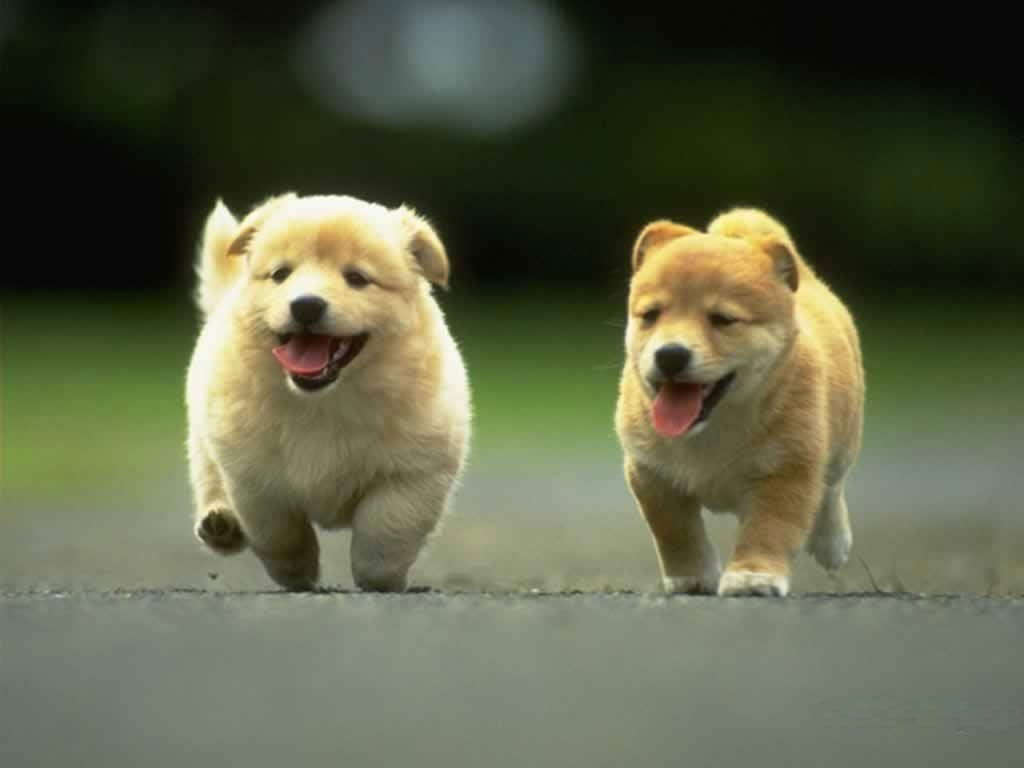 cute dog wallpapers background ~ desktop wallpaper box