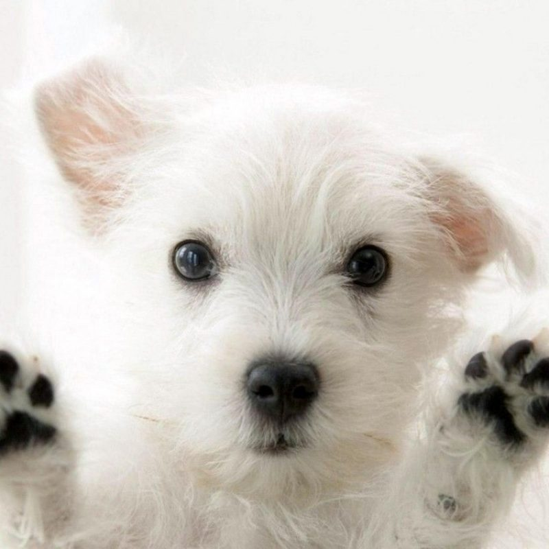 10 Top Dog Wallpaper For Android FULL HD 1080p For PC Background 2018 free download cute dog wallpapers wide desktop wallpaper box 800x800