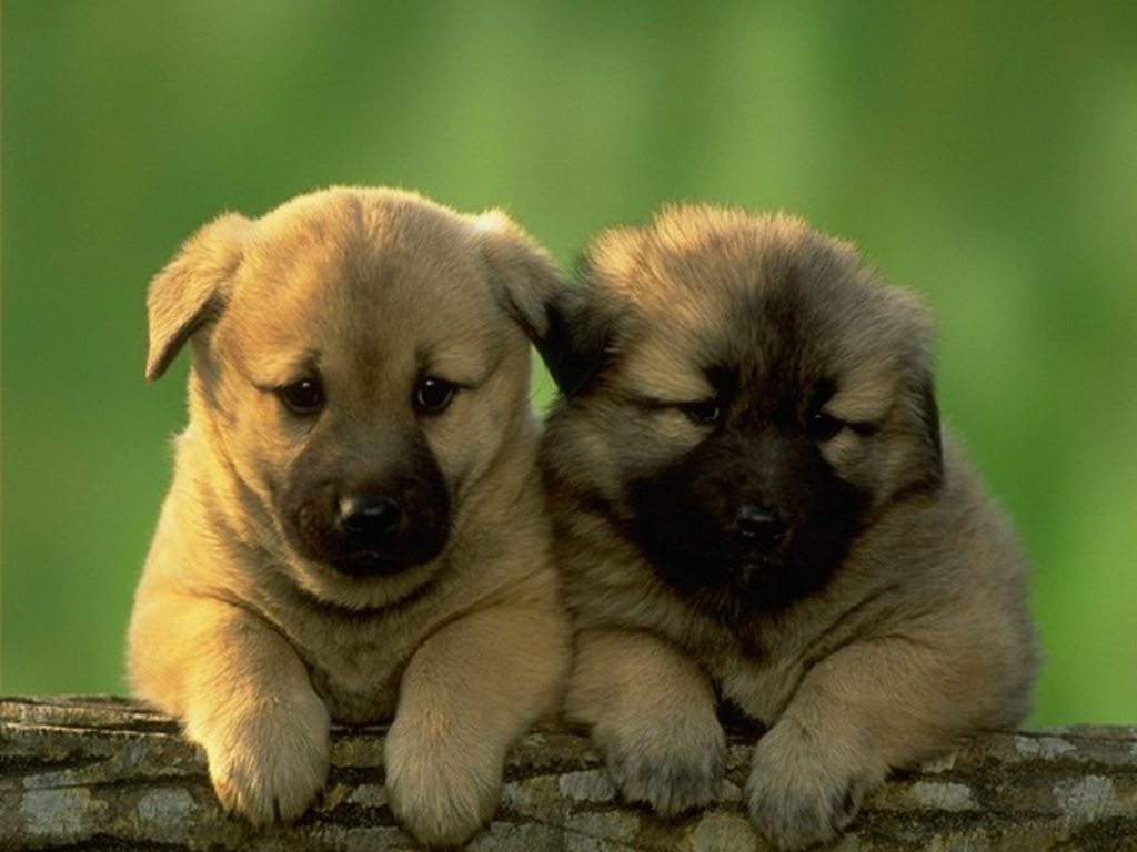 cute dogs and puppies wallpaper - wallpapers trends update
