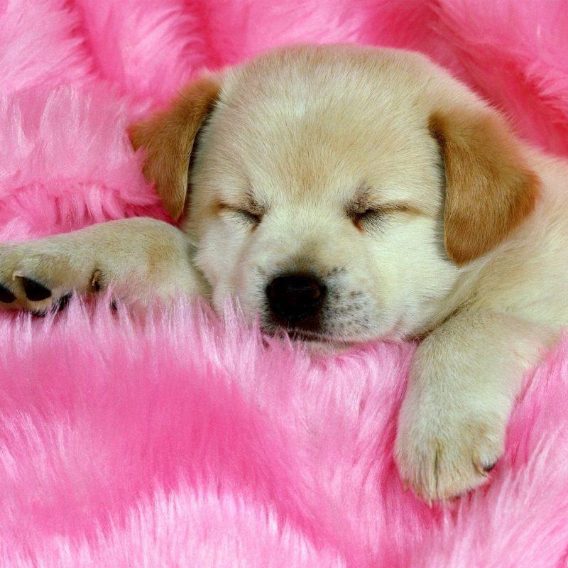 10 Best Cute Dog Wallpaper Free Download FULL HD 1080p For PC Background 2021 free download cute dogs wallpapers high definition wallpapers high definition 800x800