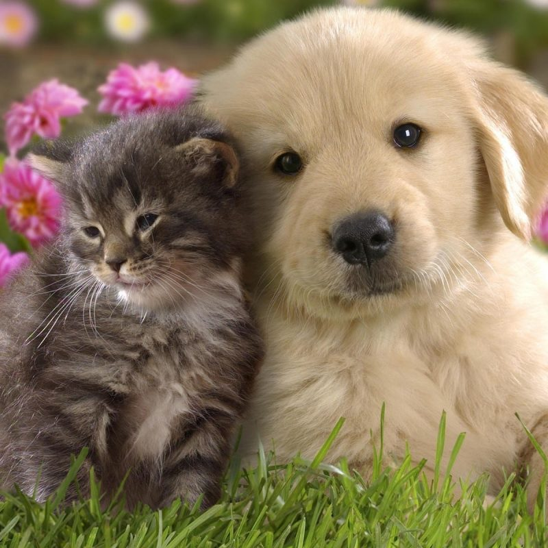 10 New Cute Puppies And Kittens Wallpaper FULL HD 1080p For PC Background 2021 free download cute kitten and puppy wallpaper cute wallpaper better 800x800