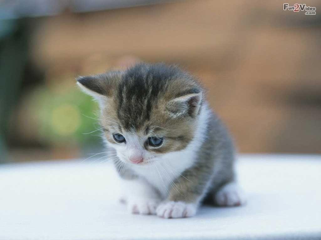 cute-kitten | animals | pinterest | baby kittens, cat and animal