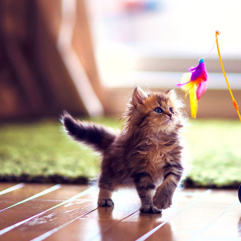 10 Most Popular High Definition Cute Wallpapers FULL HD 1920×1080 For PC Background 2018 free download cute kitten playing e29da4 4k hd desktop wallpaper for 4k ultra hd tv 800x800