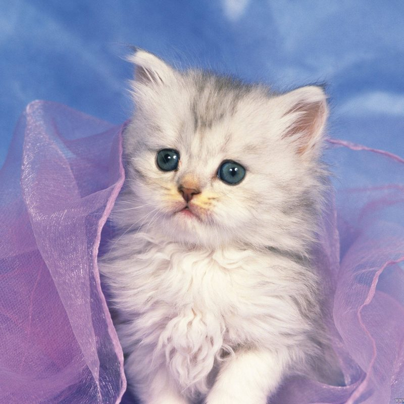 10 Most Popular Cute Kitten Pictures Free FULL HD 1920×1080 For PC Background 2018 free download cute kitten wallpapers free download 001 and pictures coloring pages 800x800