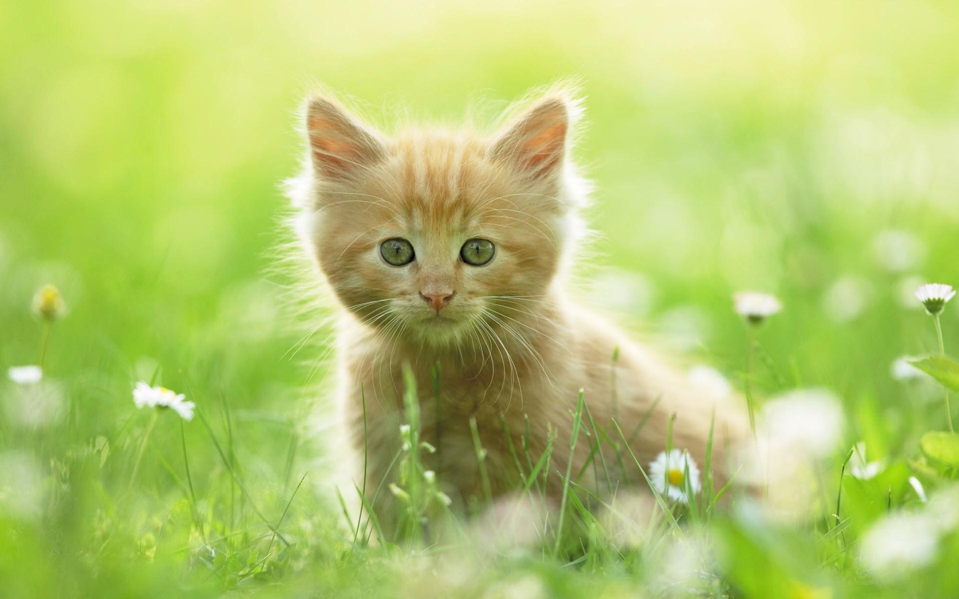 cute kitten wallpapers   hd wallpapers   id #8640