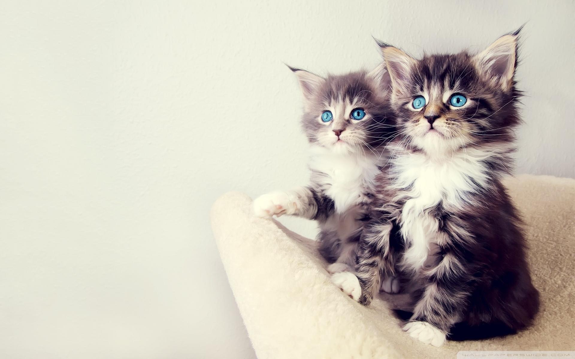 cute kittens ❤ 4k hd desktop wallpaper for 4k ultra hd tv • tablet