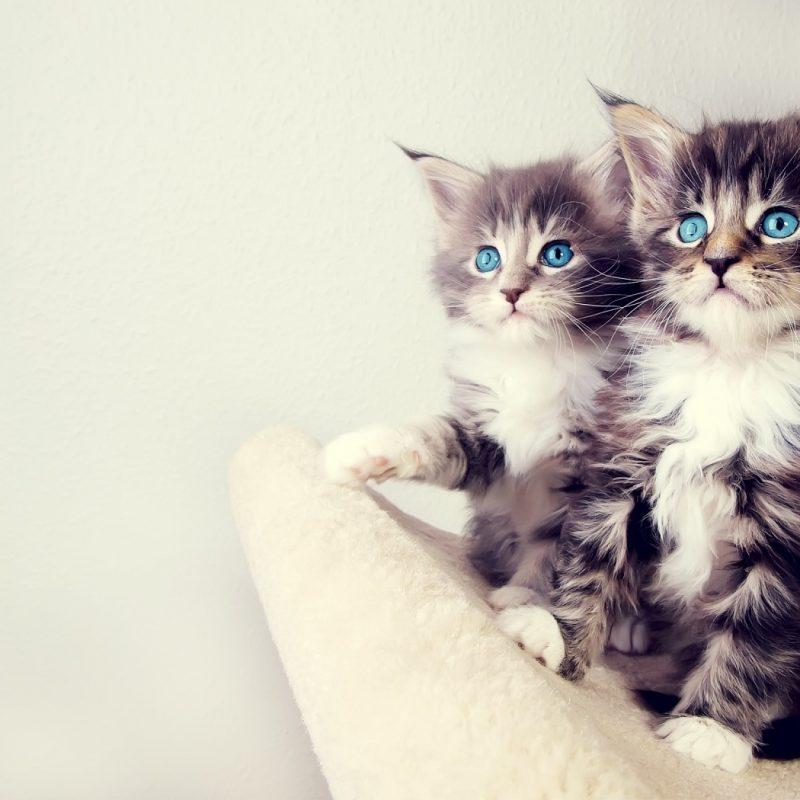 10 Best Cute Kittens Wallpapers For Desktop FULL HD 1080p For PC Desktop 2021 free download cute kittens e29da4 4k hd desktop wallpaper for 4k ultra hd tv e280a2 tablet 800x800