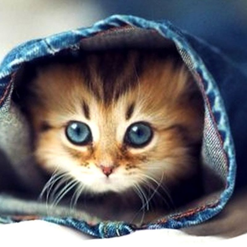 10 New Cute Baby Kitten Pics FULL HD 1920×1080 For PC Background 2018 free download cute kittens make you smarter youtube 800x800