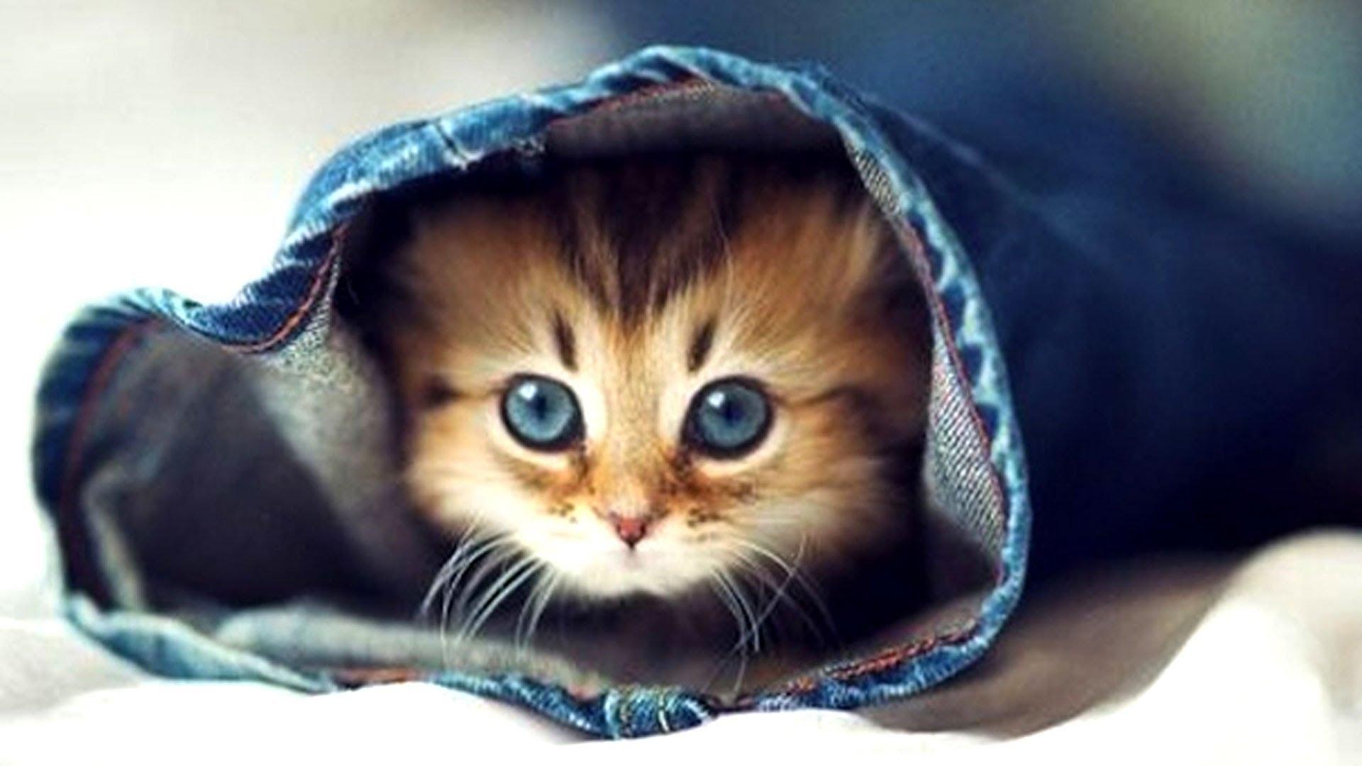 cute kittens make you smarter - youtube